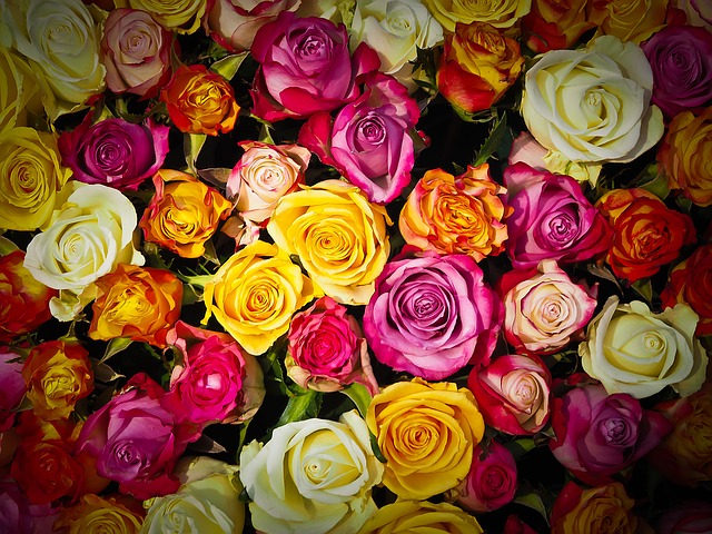 Find out about The Different Types Of Roses