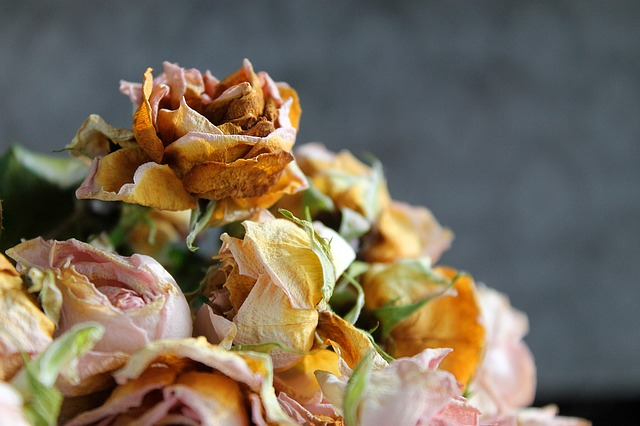 Tips On The best ways to Dry Roses