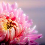 Las Flores de cada mes