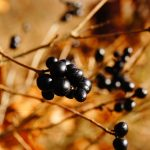 Las plantas comestibles, aprenden una habilidad de supervivencia con la ayuda de plantas comestibles